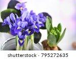 spring flowers. gardening. | Shutterstock . vector #795272635
