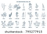 best medicinal herbs for... | Shutterstock .eps vector #795277915