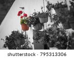 Small photo of Artificial life survives, plastic flower, selective color, black and white picture