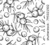 juniper vector seamless pattern ... | Shutterstock .eps vector #795321502