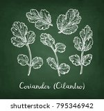 coriander  also known as... | Shutterstock .eps vector #795346942