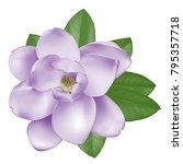 beautiful light pink purple... | Shutterstock .eps vector #795357718