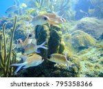 Small photo of Coral reef fish school of grunts and sargents