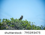 Owl Sitting Over The Bushes In...