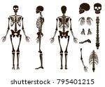 human bones skeleton structure... | Shutterstock . vector #795401215