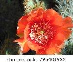 Closeup Of An Orange Blossom O...