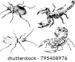vector drawings sketches... | Shutterstock .eps vector #795408976