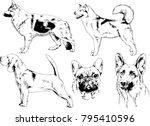vector drawings sketches... | Shutterstock .eps vector #795410596
