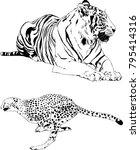 vector drawings sketches... | Shutterstock .eps vector #795414316