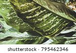 abstract tropical background... | Shutterstock . vector #795462346