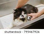 professional cat grooming in... | Shutterstock . vector #795467926