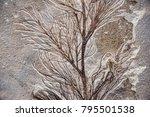sea plant fossil in stone   Shutterstock . vector #795501538