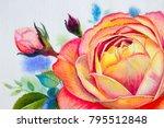 orange pink rose flower.... | Shutterstock . vector #795512848