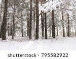 snowy wood forest. winter... | Shutterstock . vector #795582922