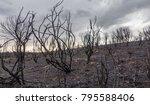 burnt bush hill after...