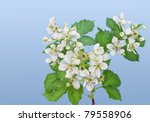 Flowers Of A Garden Blackberry...
