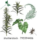 set leaf vector. collection of...   Shutterstock .eps vector #795594406