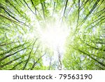 fresh green forest and beam of... | Shutterstock . vector #79563190