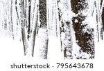 winter forest with snow on oak... | Shutterstock . vector #795643678