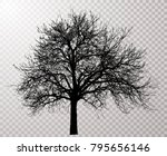 vector drawing of the... | Shutterstock .eps vector #795656146