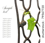 Wrought Iron Fence With A Vine