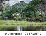 african bush elephant in kruger ... | Shutterstock . vector #795710542