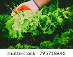 gardening  weeding weeds....   Shutterstock . vector #795718642
