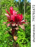 red and green tropical plants... | Shutterstock . vector #795781672