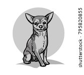 chihuahua. a small dog.... | Shutterstock .eps vector #795820855