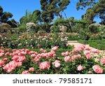Stock photo spring rose in madrid spain retiro park 79585171