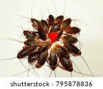 many cockroaches are dead but... | Shutterstock . vector #795878836