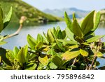 the mountains. caucasus. young ...   Shutterstock . vector #795896842