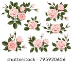 pink rose boutonniere. set for... | Shutterstock .eps vector #795920656
