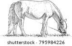 horse grazing in a meadow | Shutterstock .eps vector #795984226