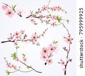 blooming cherry blossom... | Shutterstock .eps vector #795999925