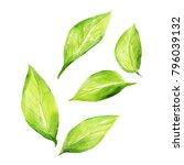 citrus watercolour leaves | Shutterstock . vector #796039132