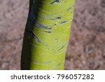 palo verde green tree bark...   Shutterstock . vector #796057282