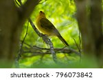 close up of wild canary... | Shutterstock . vector #796073842