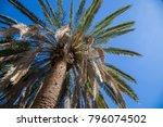upward shot of palm tree desert ...   Shutterstock . vector #796074502