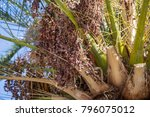 extreme close up of palm tree... | Shutterstock . vector #796075012