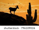Silhouette Of Desert Bighorn...
