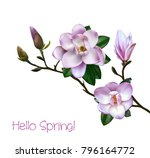 Stock vector beautiful light pink magnolia flowers on a tree branch with leaves isolated on a white background 796164772