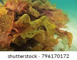 Detail Of Decomposing Frond Of...