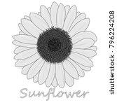 sunflower isolated on white... | Shutterstock . vector #796224208