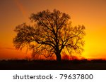 Beautiful Landscape Image With...