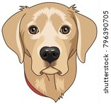 head of beige cartoony labrador ... | Shutterstock .eps vector #796390705