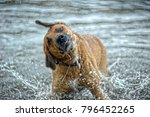 red dog bathes in the lake | Shutterstock . vector #796452265