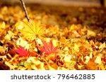 maple leaf in autumn | Shutterstock . vector #796462885