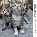 three little tiny striped... | Shutterstock . vector #796499785