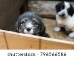 Small photo of Sad Little puppy in a wooden box is asking to be adopted with hope. Homeless black and tan dog